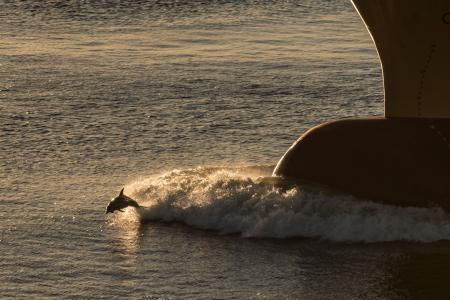 海豚和船壁纸和背景