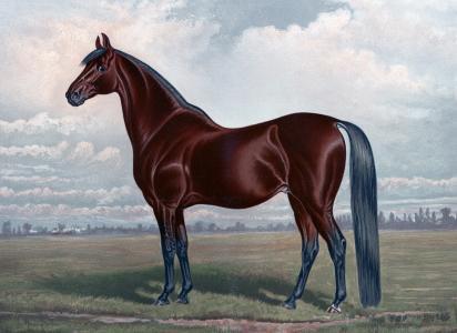 板栗马绘全高清壁纸和背景