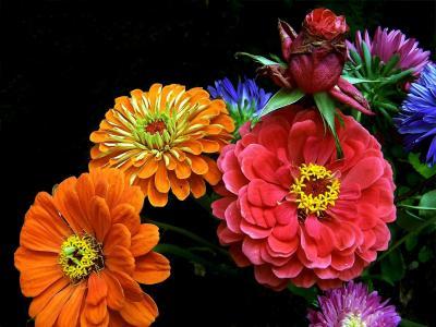 明亮和七彩花朵全高清壁纸和背景