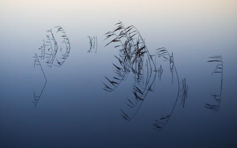 水充分的高清壁纸和背景图像