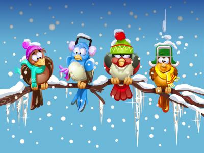 在树枝上的冬季鸟全高清壁纸和背景