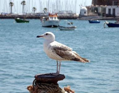 海鸥在葡萄牙观看渔船全高清壁纸和背景