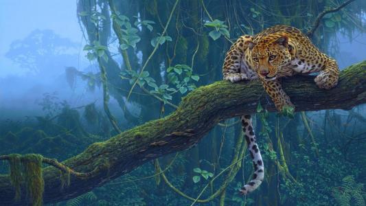 豹全高清壁纸和背景