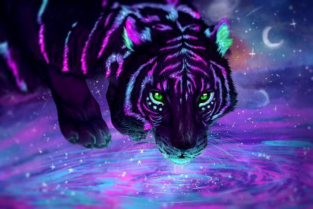 老虎全高清壁纸和背景图像