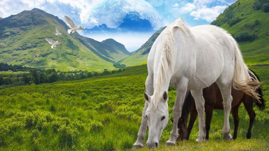 在幻想土地充满高清壁纸和背景的马匹