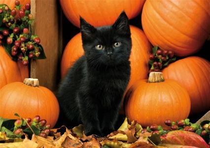 黑色小猫与南瓜全高清壁纸和背景