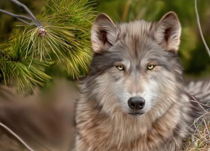 对于所有的狼朋友壁纸和背景