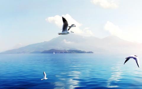 海鸥全高清壁纸和背景
