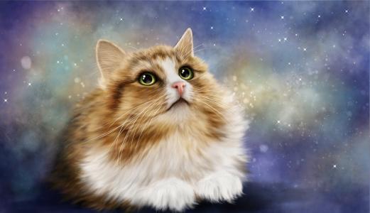 绿眼的猫全高清壁纸和背景