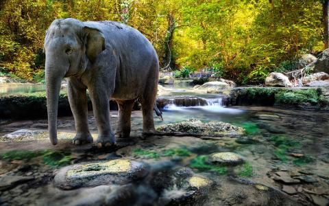 大象全高清壁纸和背景