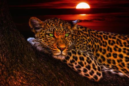 豹4k超高清壁纸和背景