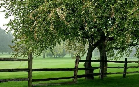 篱笆全高清壁纸和背景图像